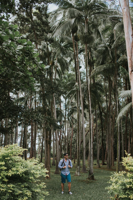 Palm tree heaven.