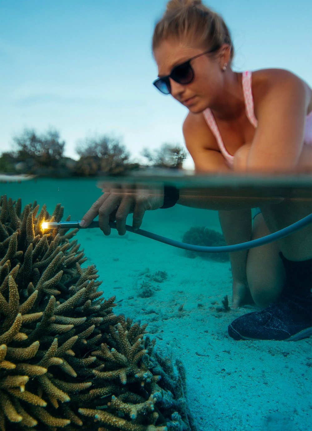 A technique used to estimate the health of a coral where a pulse of light is used to provide a fast assessment of the overall photosynthetic state.