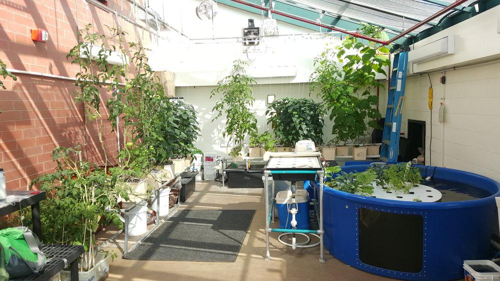 Lush Garden @ PS 89.jpg