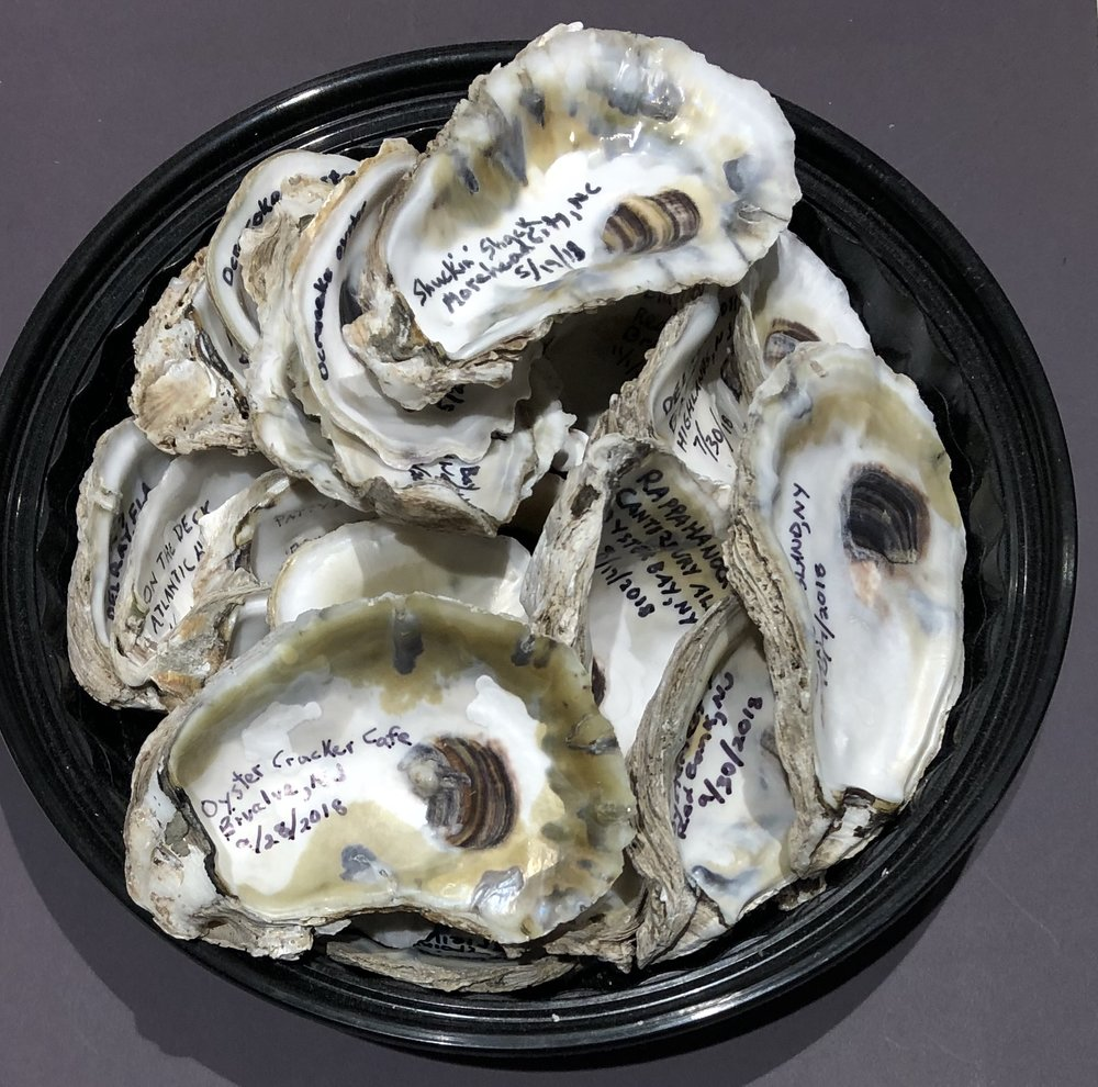 Oyster shells I've collected