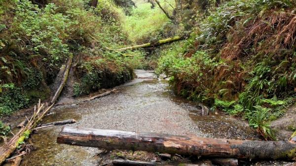 rainy-redwoods2.jpg