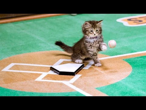 The Paw Star Game
