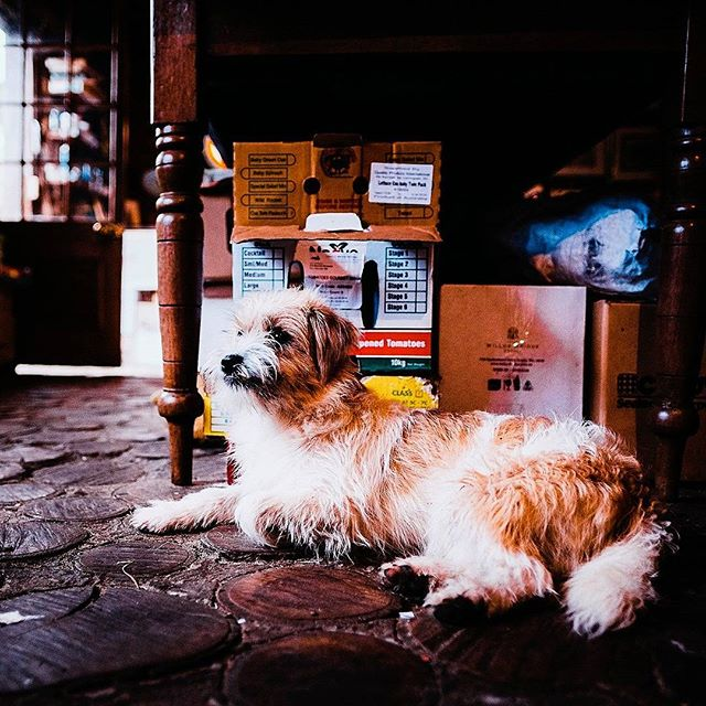 A true companion - Photo: @elementsmargaretriver #russellordphoto #markboskell .... #justanotherdayinwa #margaretriver #AustraliasSW #elementsmargaretriver #travel #adventure