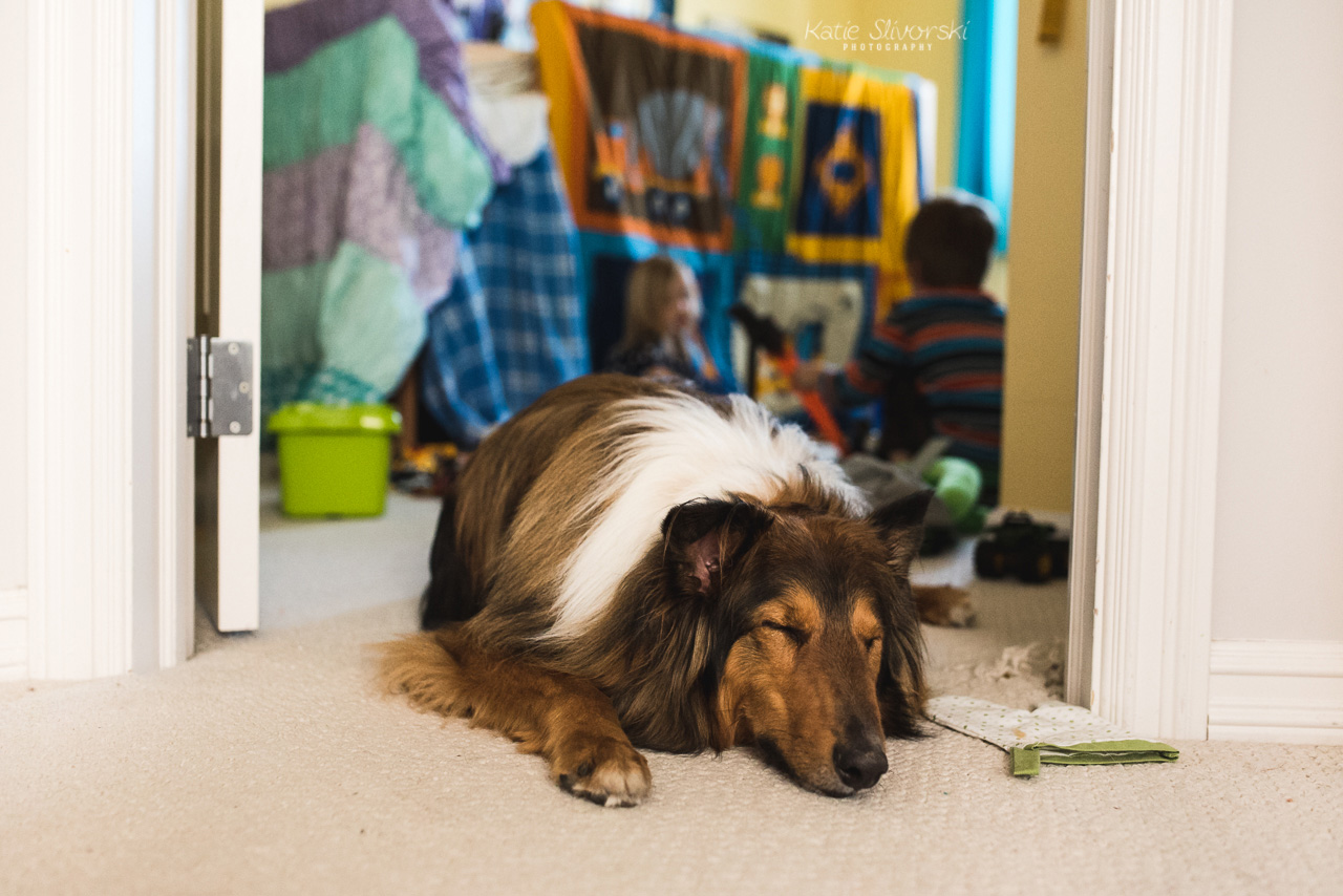 a photo of a dog blocking a doorway