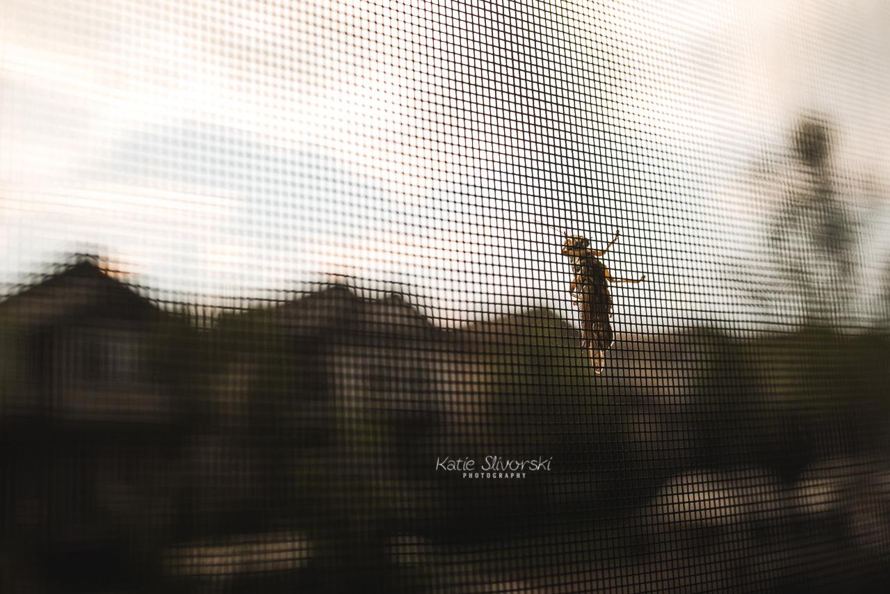 grasshopper hanging on screen