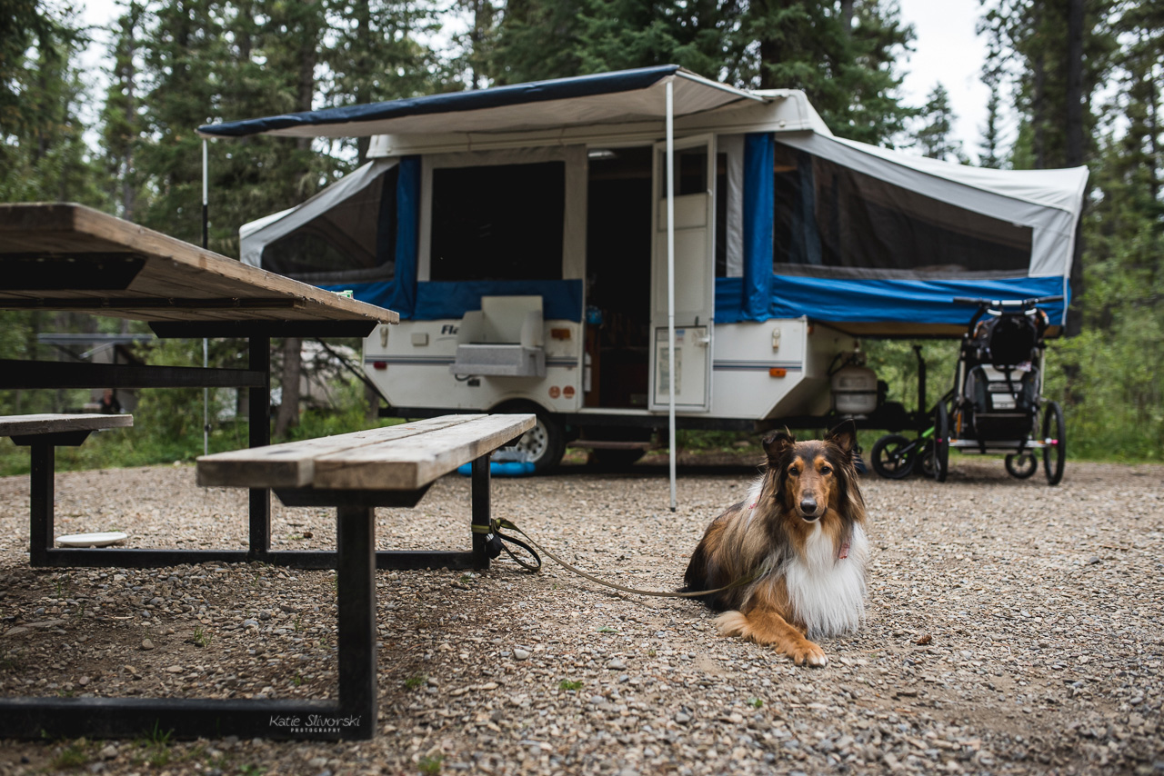 dog outside tent trailer camping