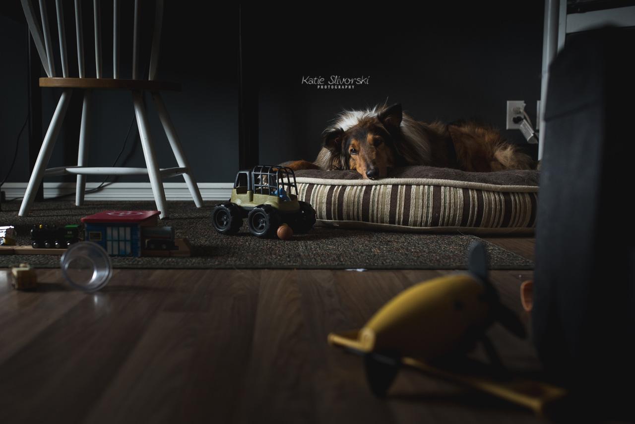 Edmonton photographer's dog resting on bed