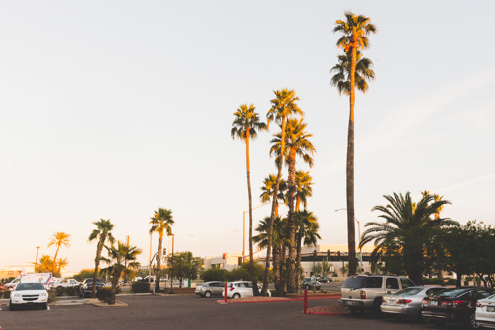 Enjoying the sunset. / 2/7/16 / Mesa, AZ
