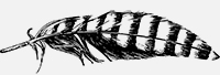 Feather-3.jpg