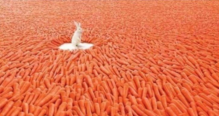 bunnycarrots.jpg