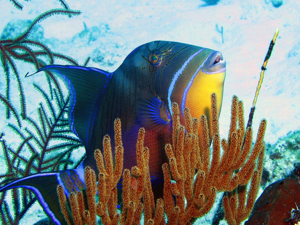 Cool Fish.jpg