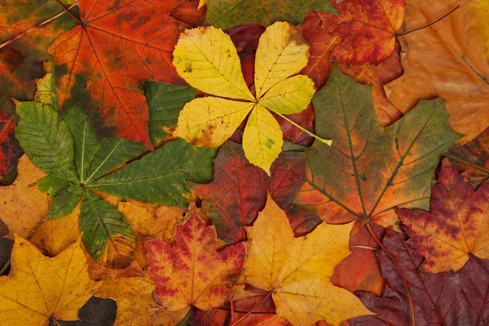 colorful-autumn-leaves-871286965014L8g8.jpg