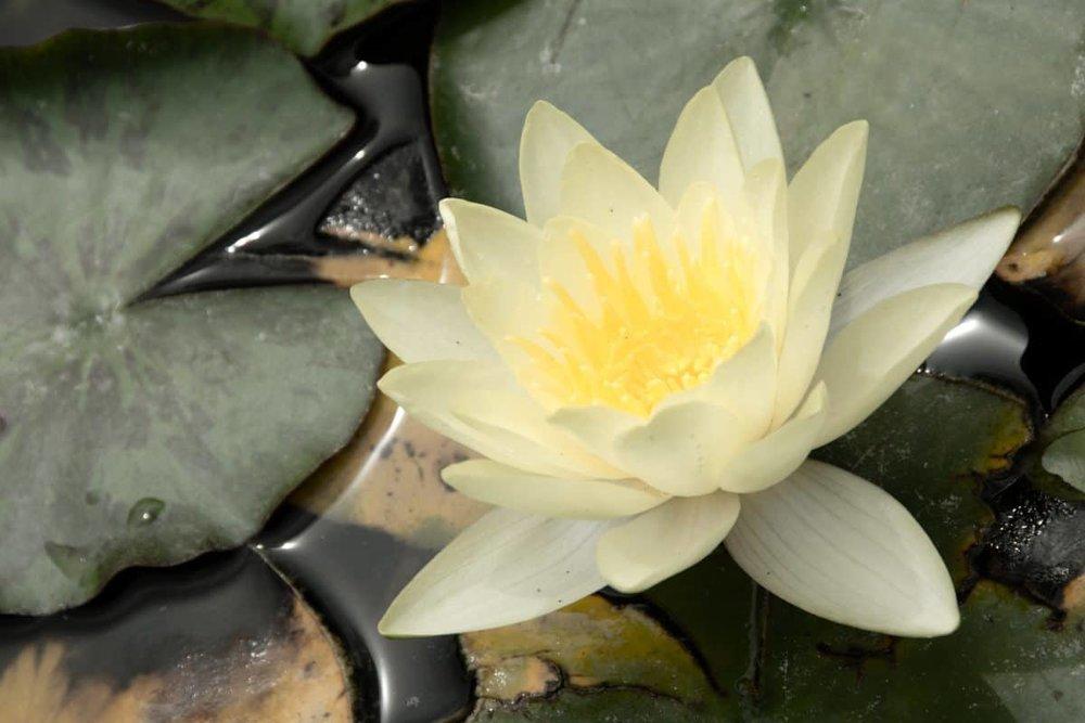 Meditation Facilitator trainings - TORONTO/HAMILTON