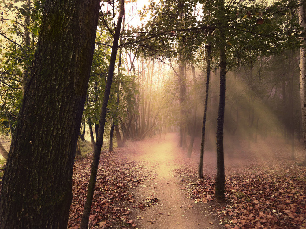 path_in_the_forest___sunset_light__premade_by_simbores-d867r0u.jpg