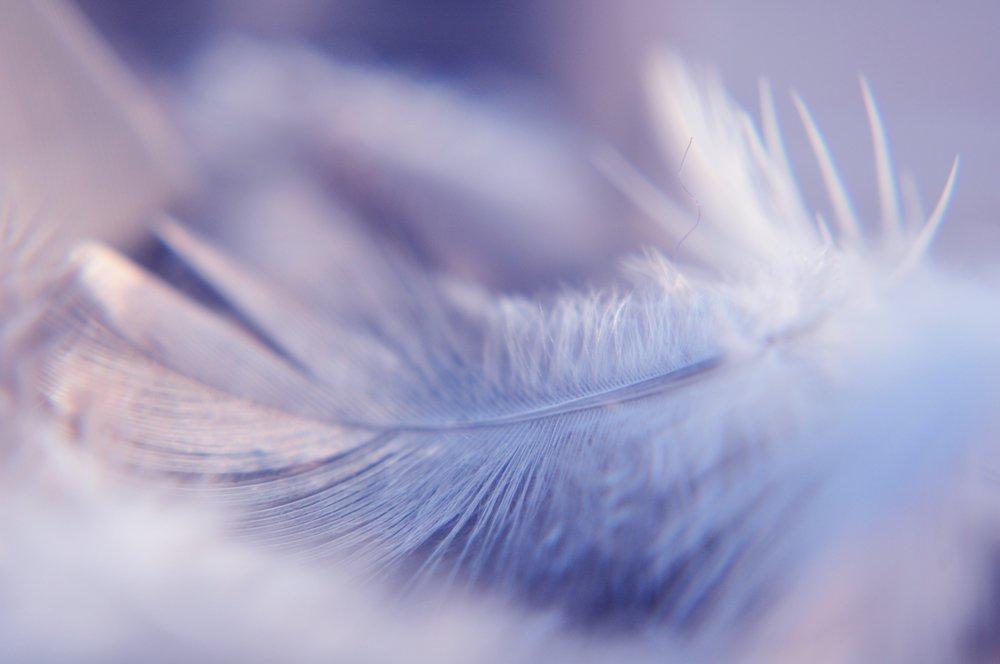 bird-feathers-9.jpg