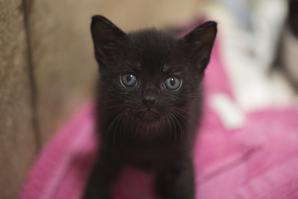Black kitty 1.jpg