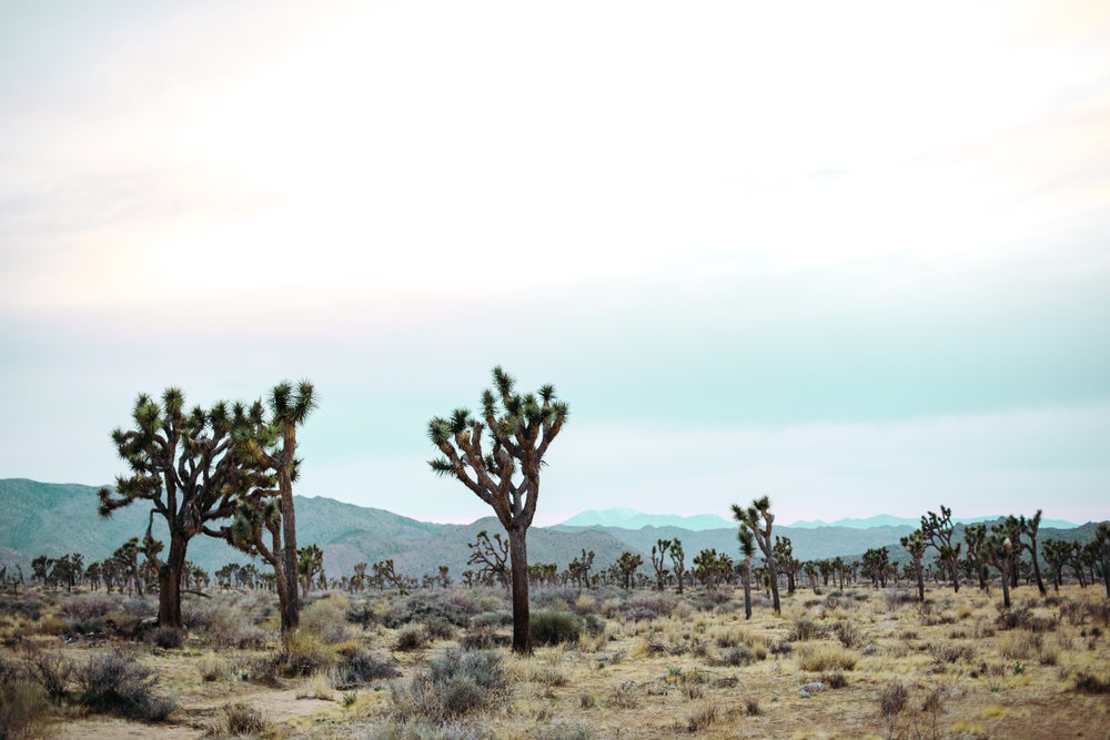 bohemian couple joshua tree engagement-17.jpg