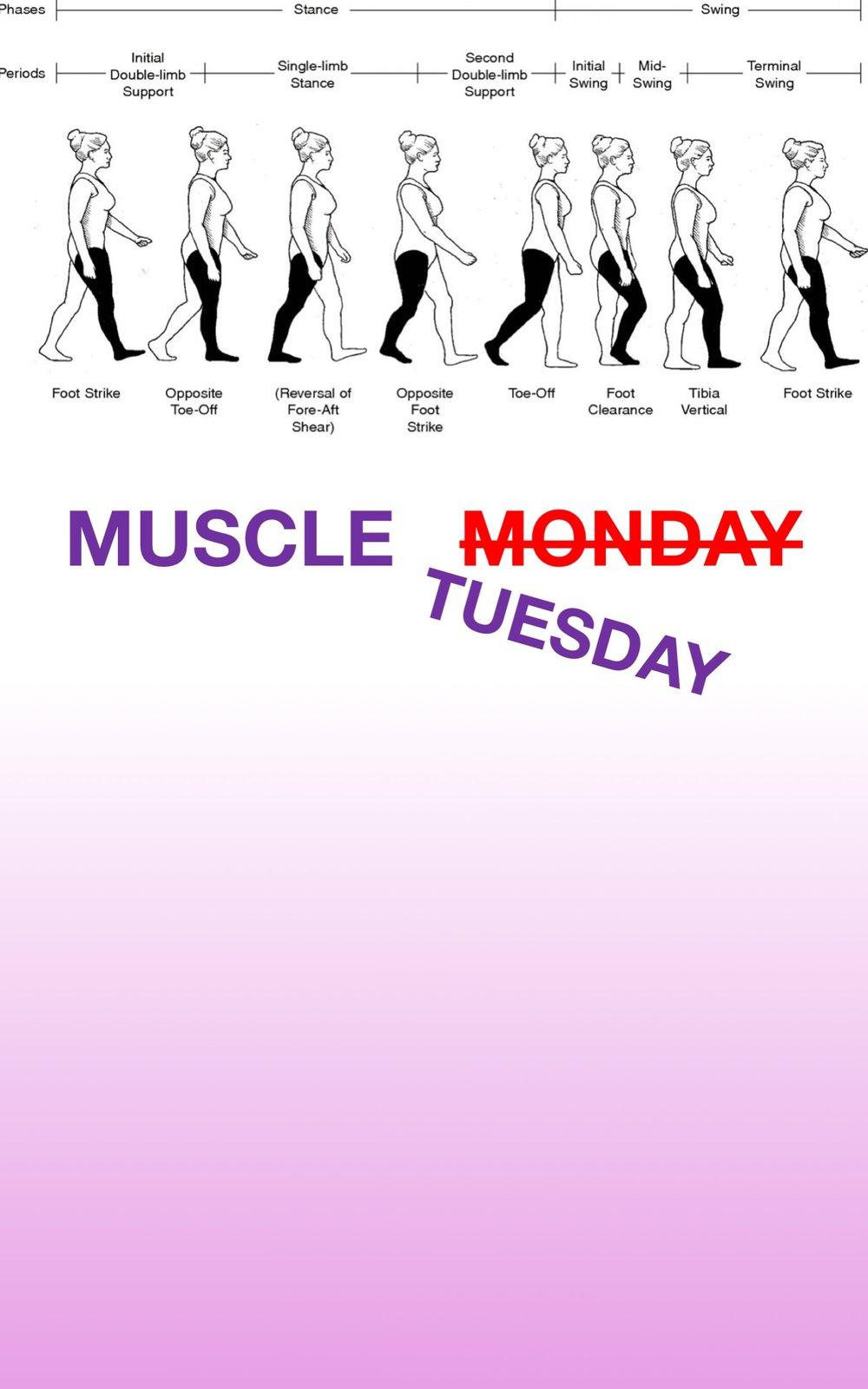 Gait Muscles25.jpg