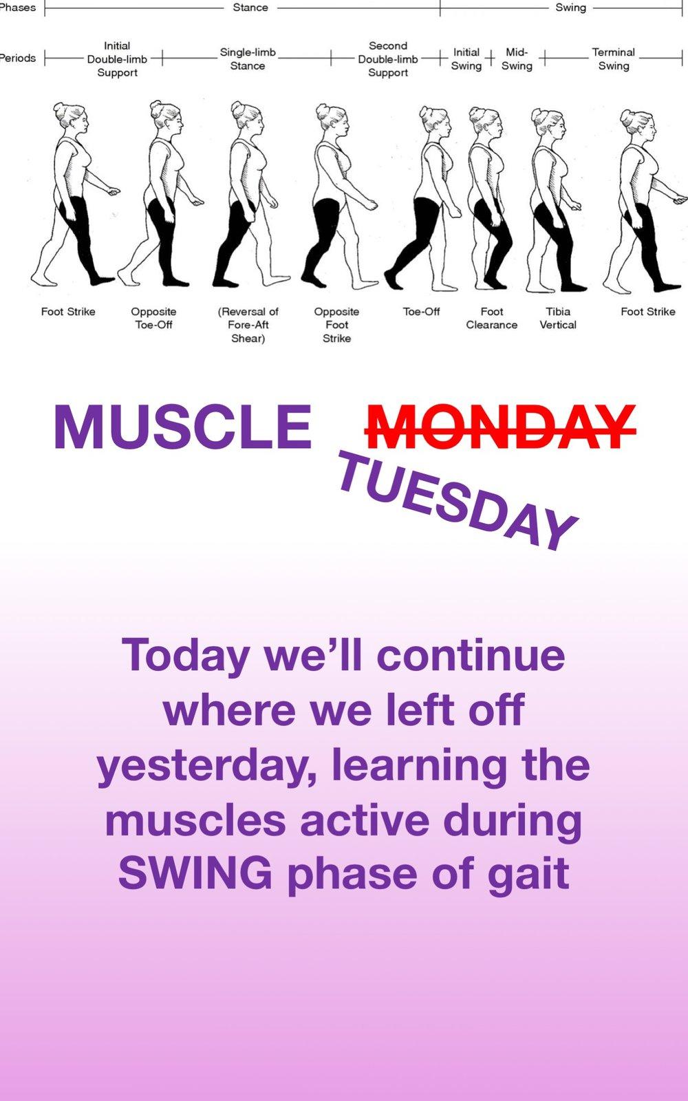 Gait Muscles26.jpg