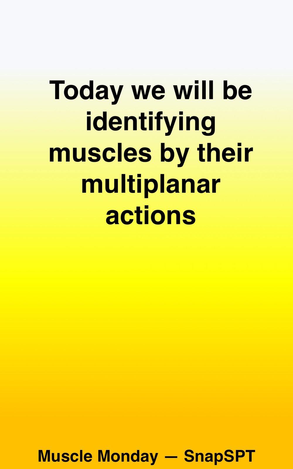 MuscleActions02.jpg