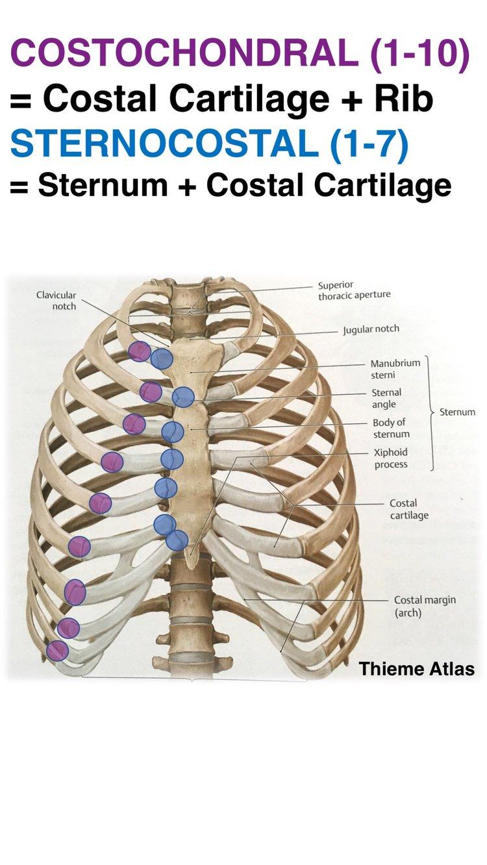 Nett Kanal 7 Grays Anatomie Fotos - Menschliche Anatomie Bilder ...