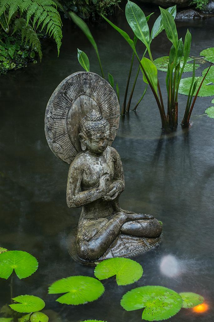 Water Garden-26.jpg