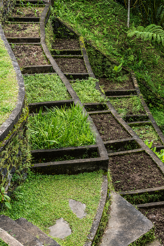 Vegetable Garden-37.jpg