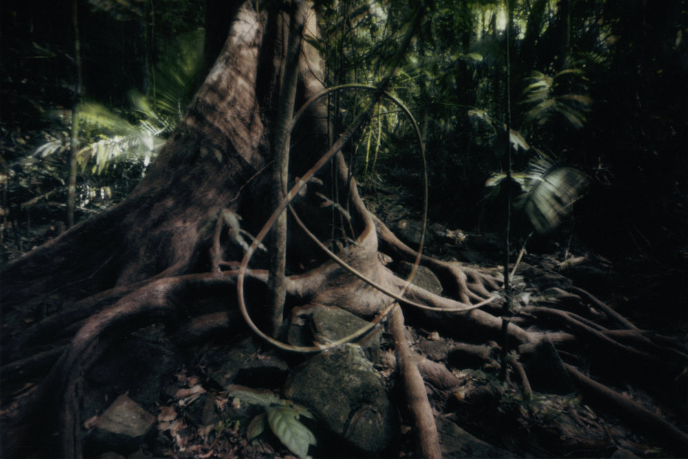 Knot. Cape Tribulation, Australia, 2013