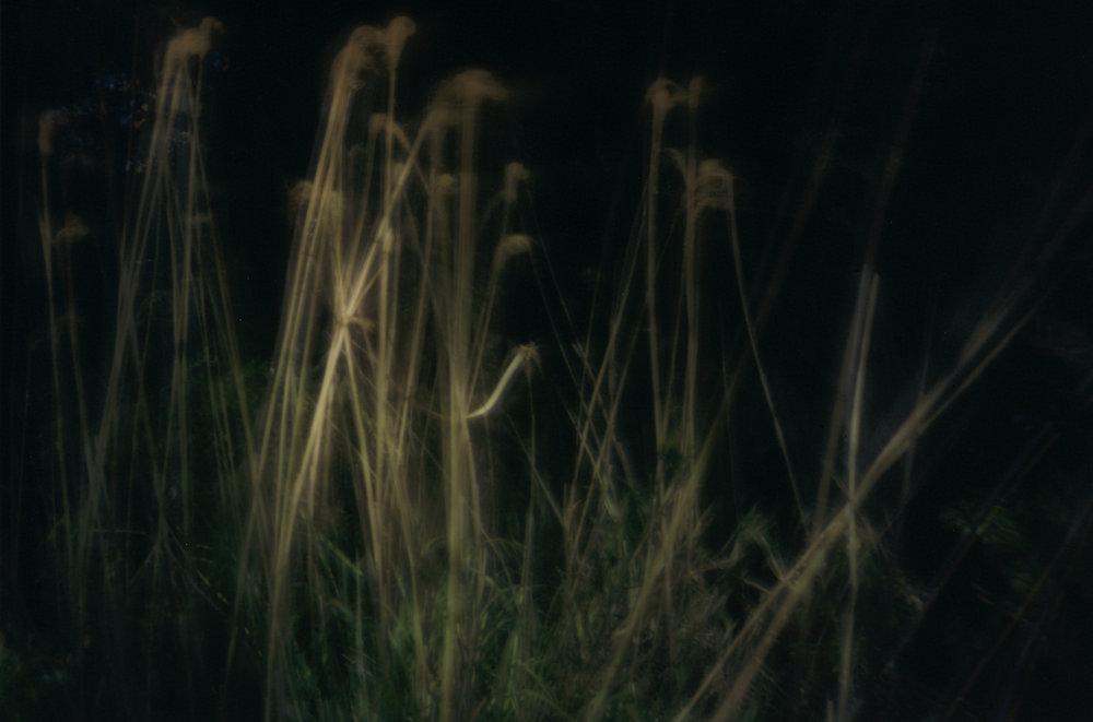 Grasses. Shikoku, Japan, 2013