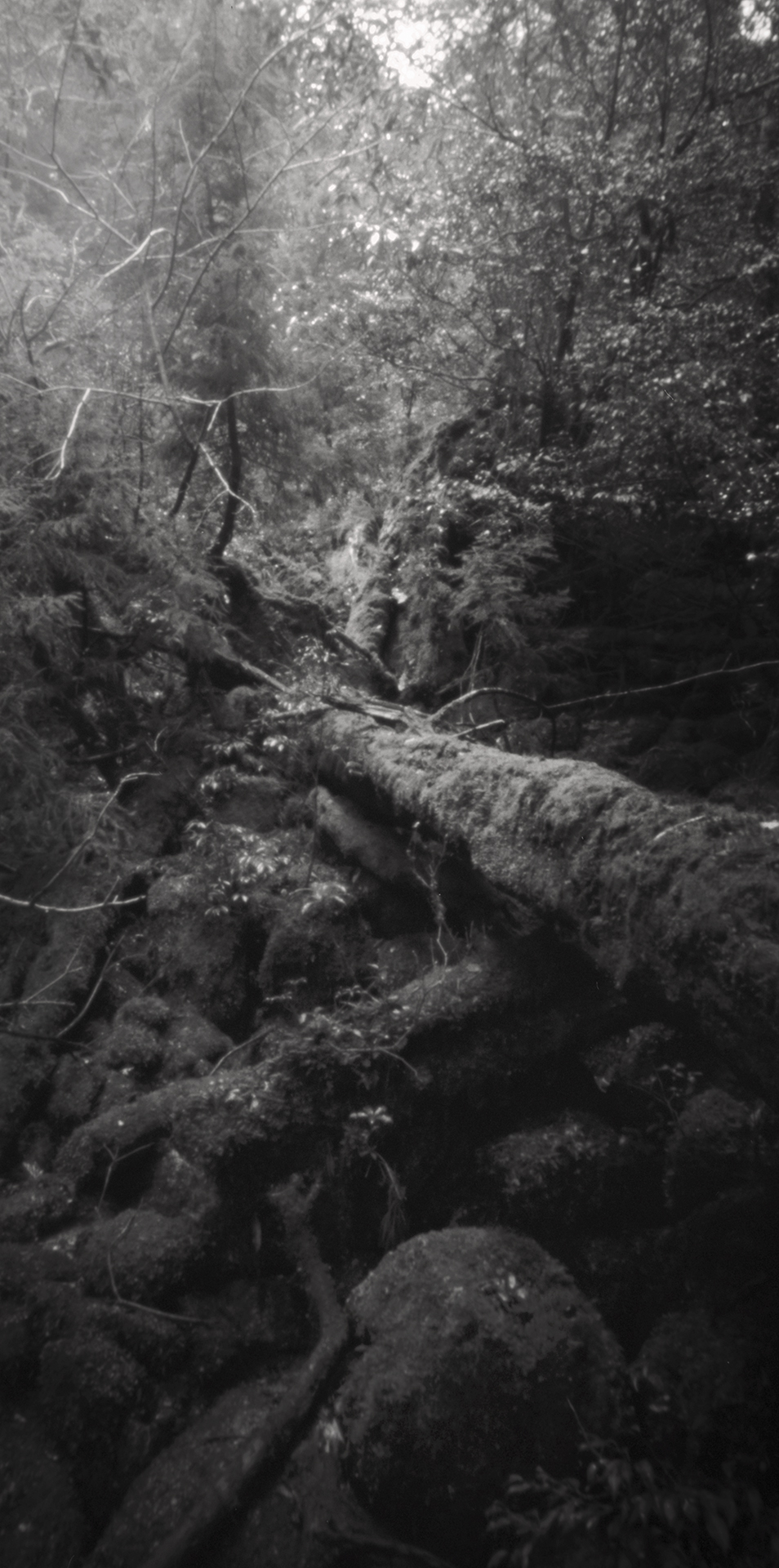 Fallen tree, Kusugawa trail. Japan, Yakushima, 2015