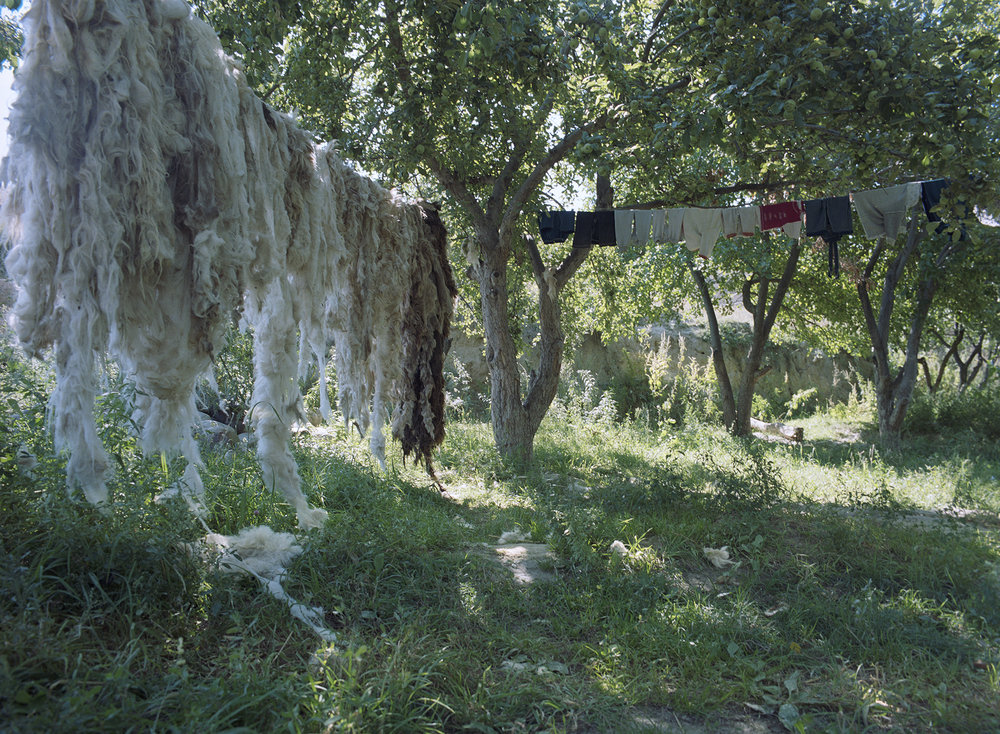 2007 Xinjiang - wool is hanging to dry in the orchard.