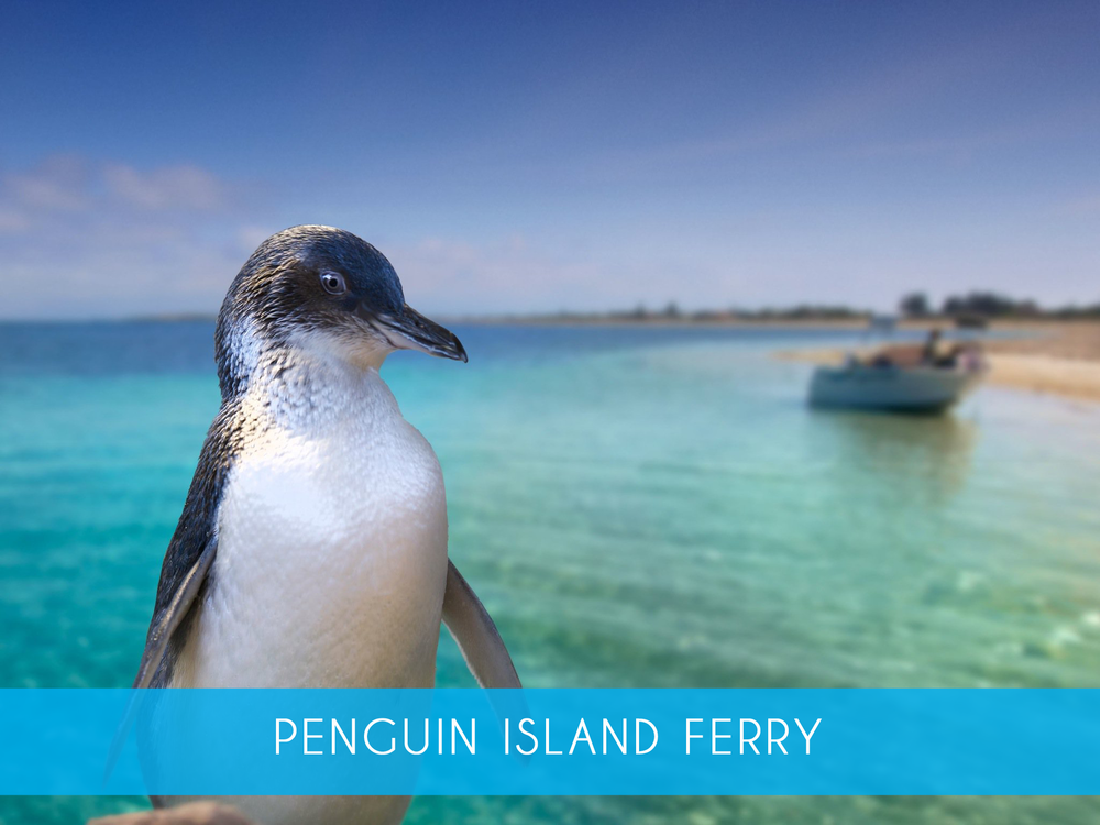 Penguin Island FerrY    A five minute ferry ride is all it takes to meet the world's smallest penguins and soak up the beauty of Perth's island nature reserve    Adults from $19 or $25 inc Penguin Feeding  More Info
