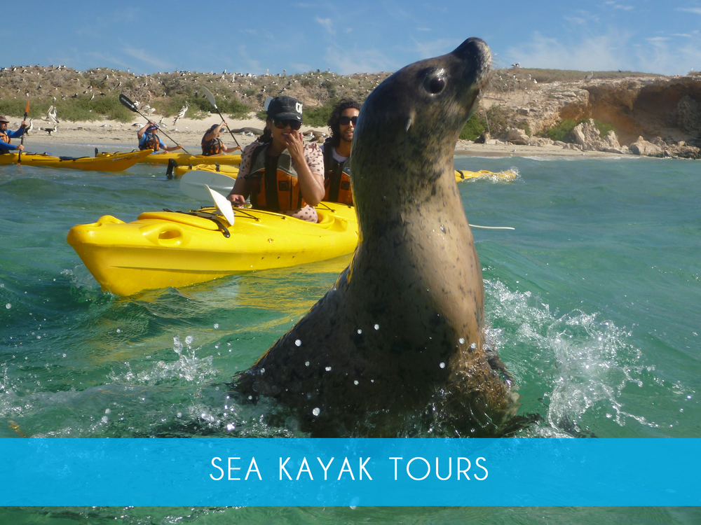 Sea kayak tour    Spend the day exploring the islands and spotting the wildlife on a guided sea kayak tour! Includes guided walk and snorkeling on Penguin Island. Ideal for first time & experienced paddlers  Adults From $180   MORE INFO