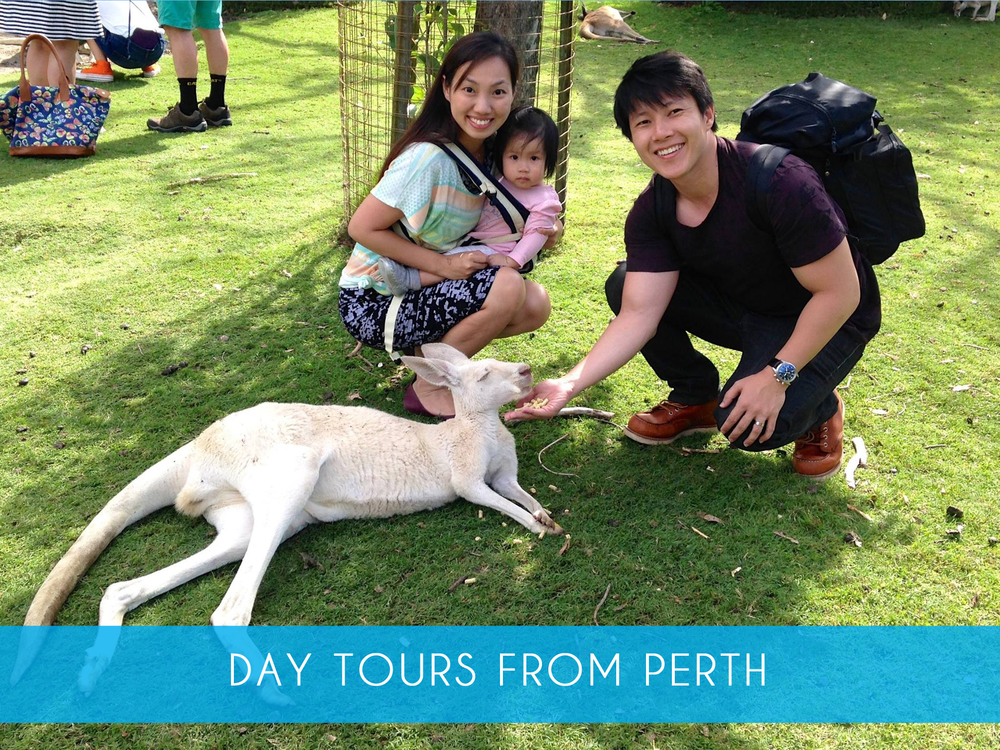 DAY TOURS FROM PERTH.png