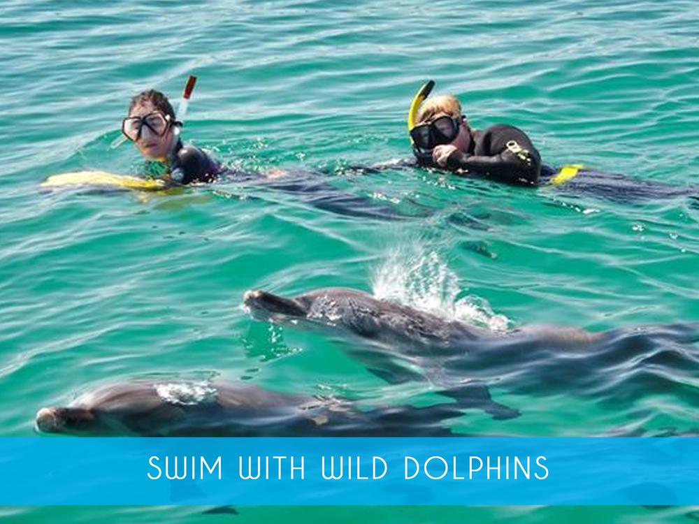 dolphin swim 2.png