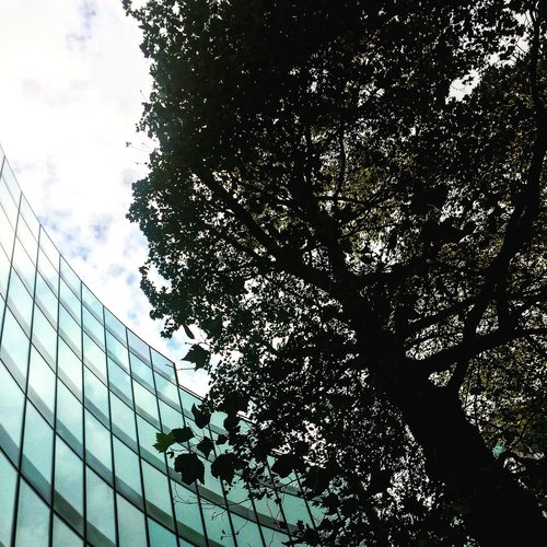 Foster+Partners curved facade around a protected tree