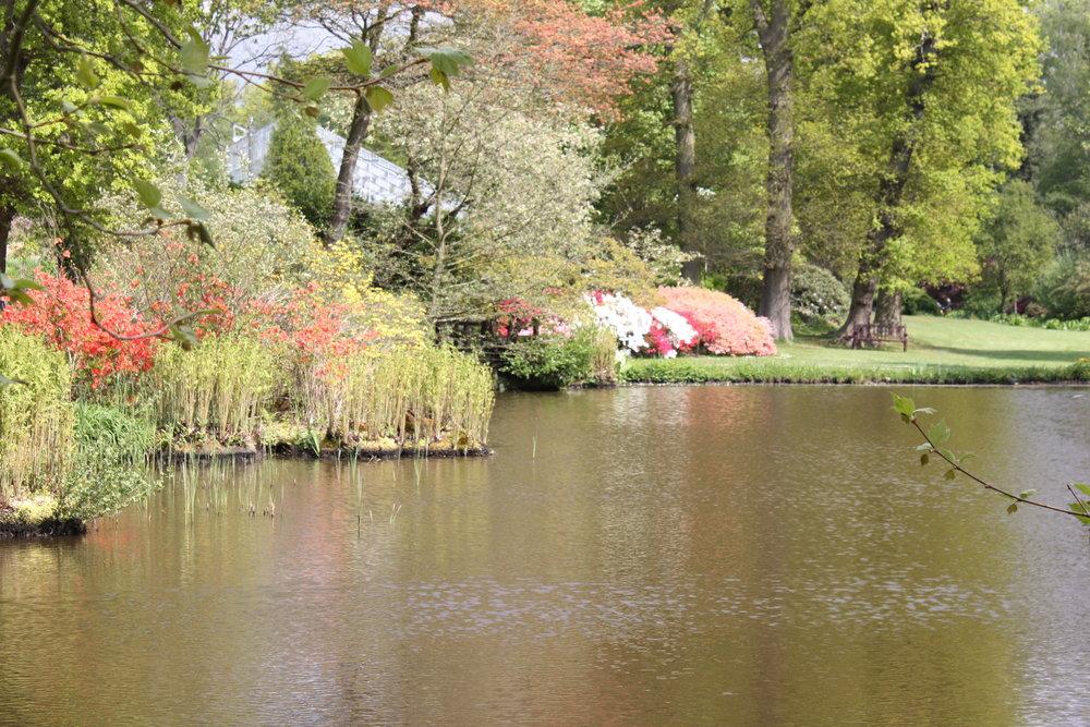 woodland garden view.JPG