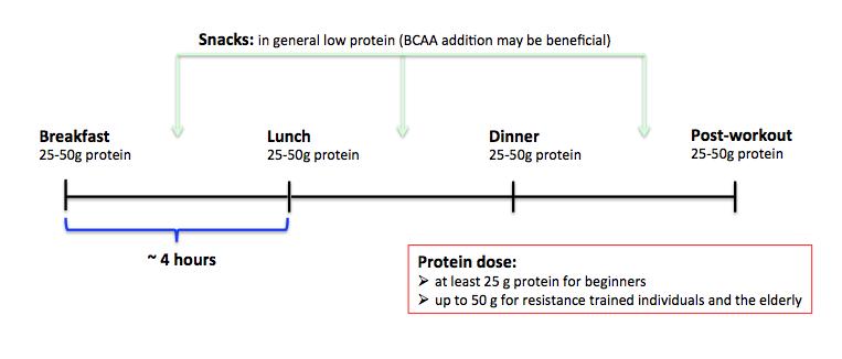 Meal strategies for more gains — ScienceStrength
