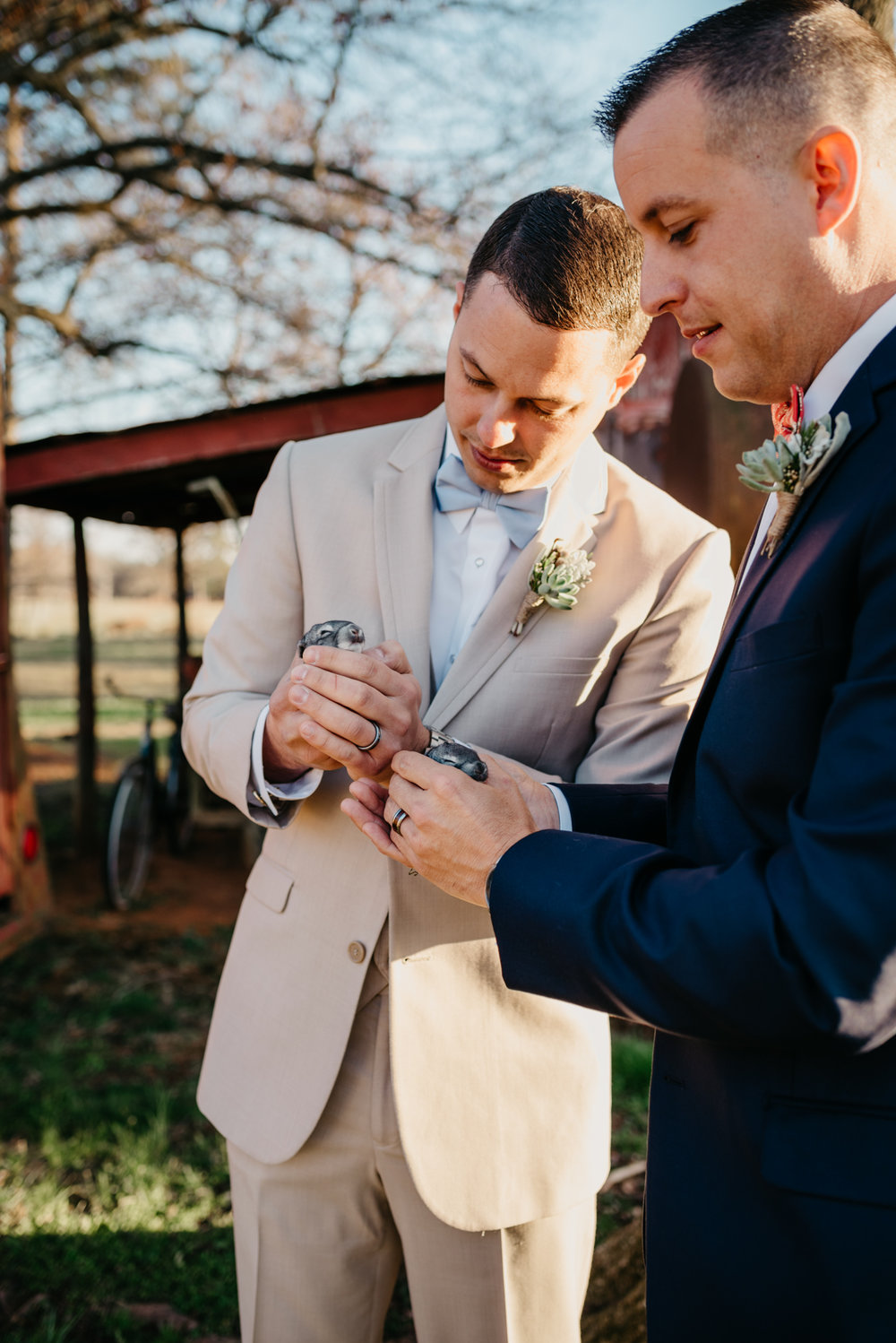 The grooms hold chinchilla bunnies outside in the sunset during the rustic farm styled engagement session with Rose Trail Images at Windy Hill Farm near Raleigh, NC.