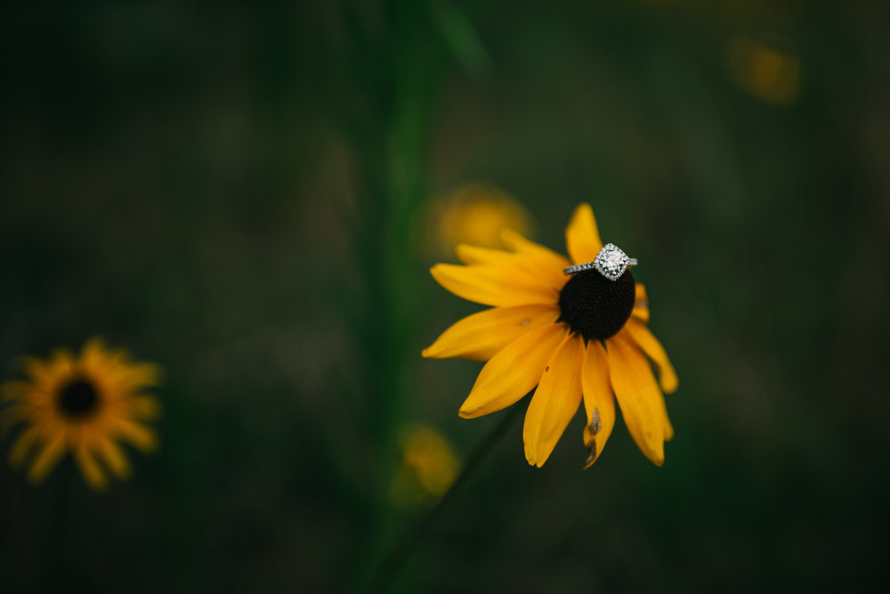 The engagement ring sits on a Black-Eyed Susan flower during a summertime engagement session with Rose Trail Images in Wake Forest, North Carolina.