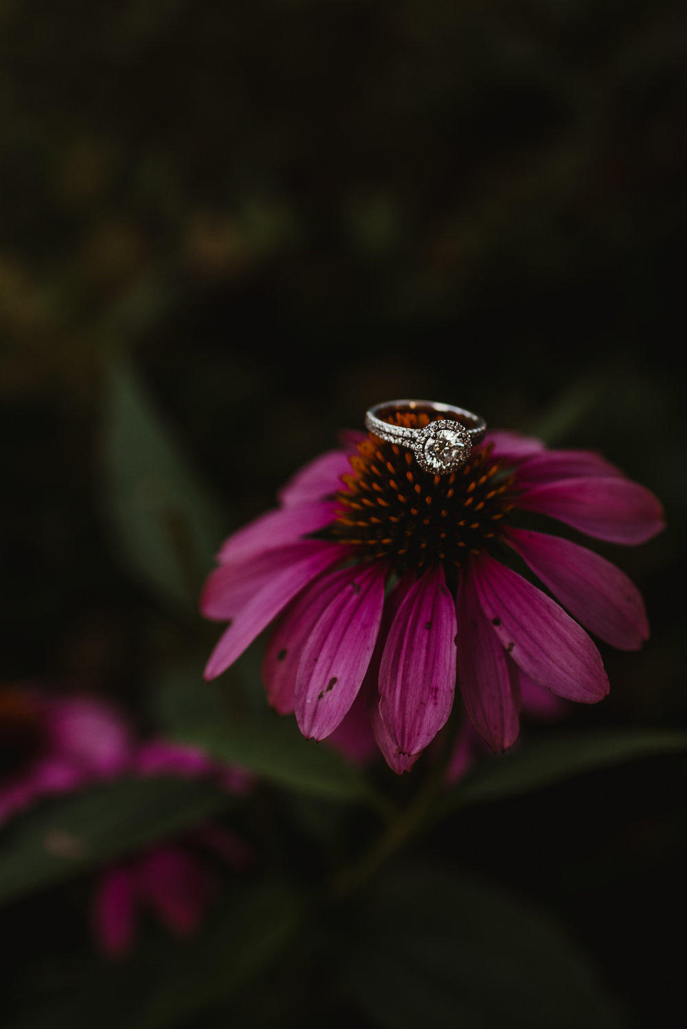 The engagement ring sits atop a bright pink daisy during their engagement session at Fred Fletcher Park in Raleigh, North Carolina with Rose Trail Images.