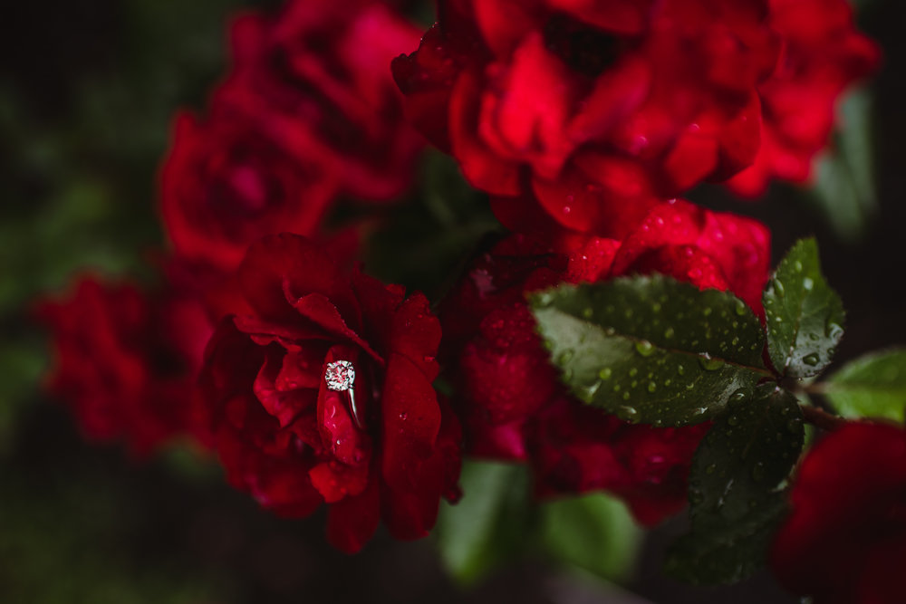 Diamond engagement rings, red roses, and rain at the Raleigh Rose Garden engagement session with Rose Trail Images.