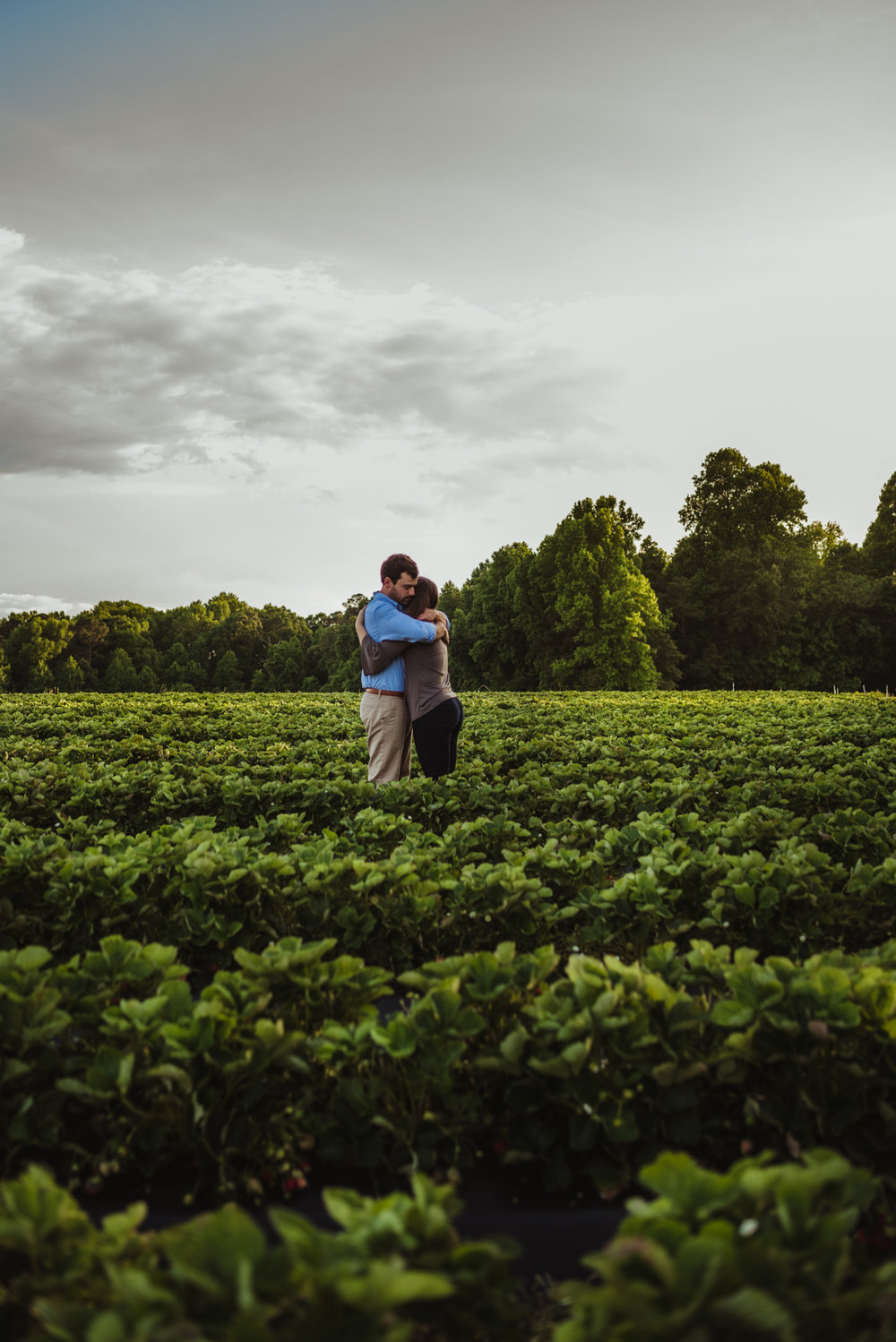 The bride and groom to be hug each other tight in the strawberry patch for their engagement pictures with Rose Trail Images at their family farm in Benson, North Carolina.