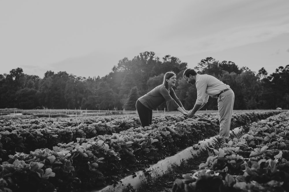 The bride and groom to be laugh over the strawberries during their engagement pictures with Rose Trail Images at their family farm in Benson, North Carolina.