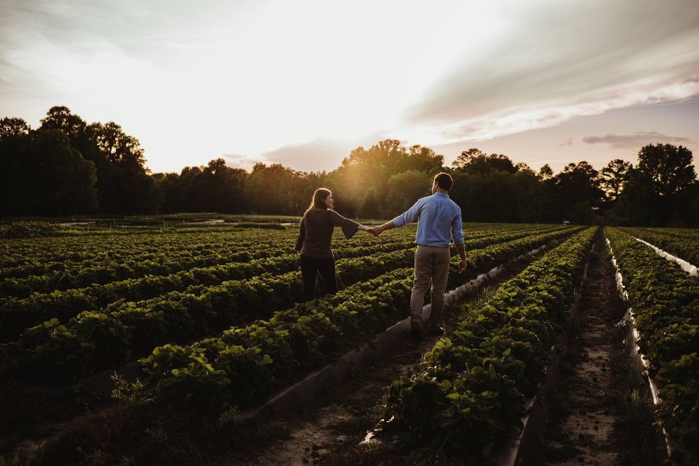 The bride and groom to be hold hands at sunset over the strawberries during their engagement pictures with Rose Trail Images at their family farm in Benson, North Carolina.