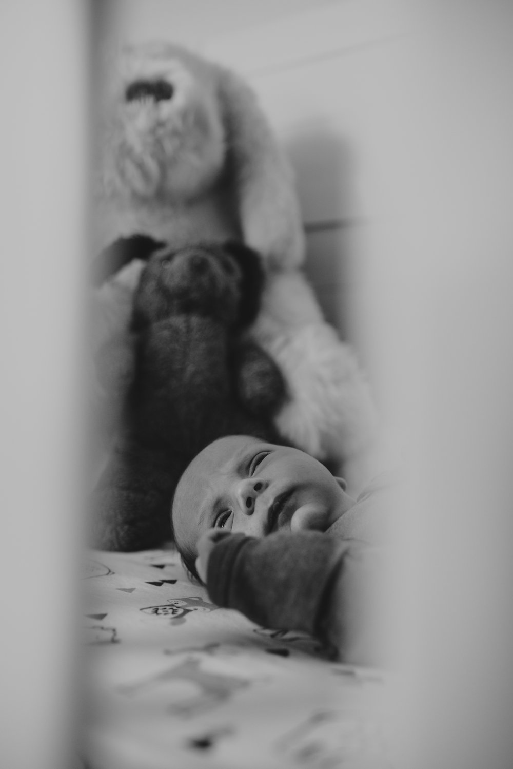 The new baby lays in his crib with his parents' stuffed animals in his nursery in Wake Forest, a black and white image by Rose Trail Images.
