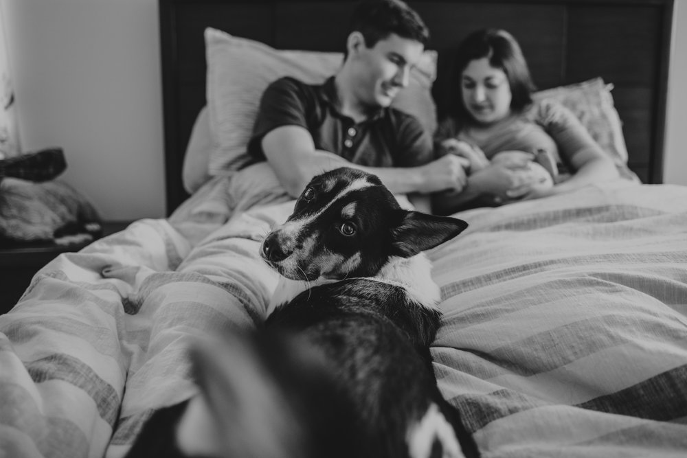 The family snuggles with their newborn son and their puppy in bed in Wake Forest, a black and white image by Rose Trail Images.