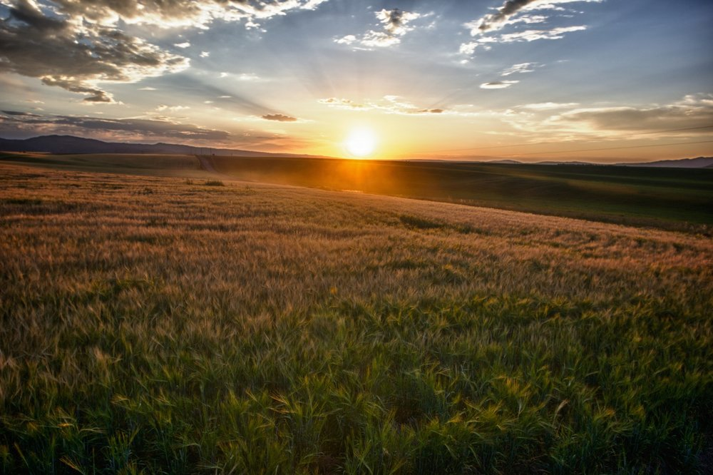 sun-rays-over-field-of-grain.jpg