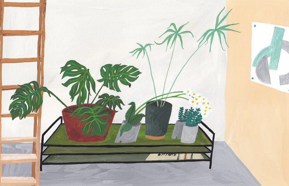 the plants low copy.jpg