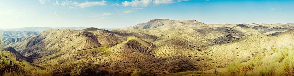 ruiroboredomadeira_landscape1.jpg